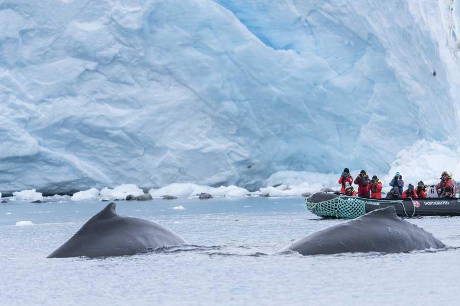 2021/22 AANBIEDING 12-Daagse expeditie Antarctica, Hoogtepunten van het bevroren continent