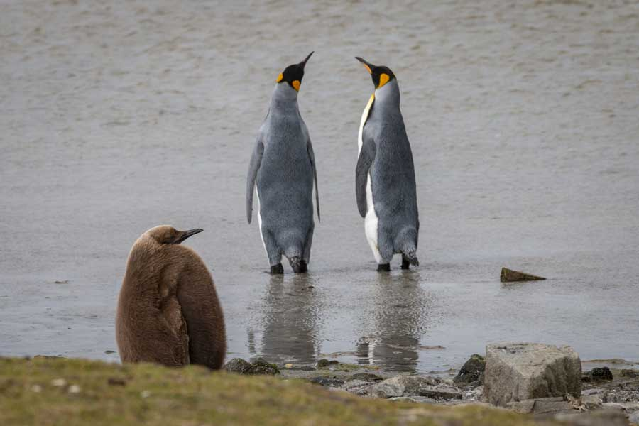 2022 AANBIEDING 19-Daagse expeditie Antarctica en de Falkland eilanden