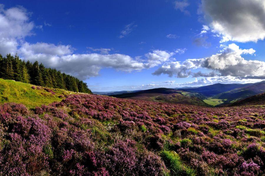 Sfeerimpressie 9-Daagse autorondreis Zuidoost Ierland - Inns