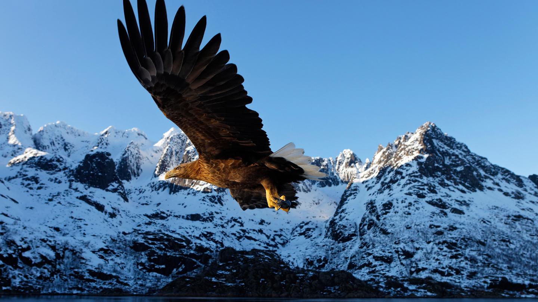 Zeevogels, zeehonden en adembenemende natuur, Tromso