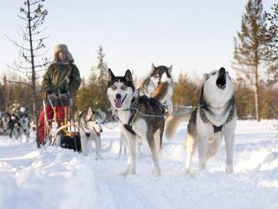 10 km huskysafari in Levi